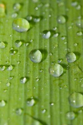 Väggdekor wate rdrops på ett grönt blad