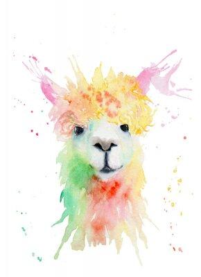 Väggdekor watercolor drawing of an animal - alpaca, drops, splashes