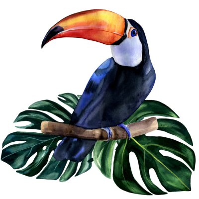Väggdekor Watercolor hand painted colorful realistic illustration of toucan bird with monstera leaves. Bright tropical composition is perfect for invitation for thematic wedding or party.