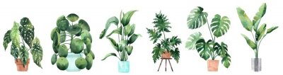 Väggdekor Watercolor image with tropical leaves and leaves of indoor plants. Home plant in pots. Greenery. Juicy. Floral design element. Perfect for invitations, cards, prints, posters.