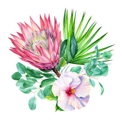 Väggdekor Watercolor protea flower, isolated on white background. Botanical illustration. Hand painted watercolor.