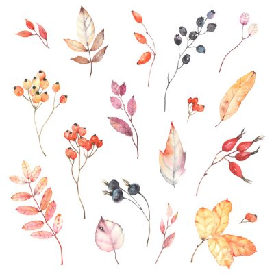 Väggdekor Watercolor set of branches with berries dog rose, rowan and colorful leaves. Autumn illustration isolated on white background, decoration collection for your design.