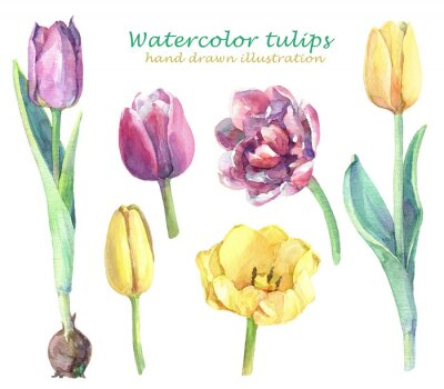 Väggdekor Watercolor set of yellow, violet and pink tulips.
