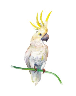 Väggdekor Watercolor tropic bird: yellow crested cockatoo. Single parrot on white background. Natural illustration