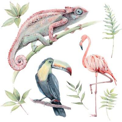 Väggdekor watercolor tropical animals set.
