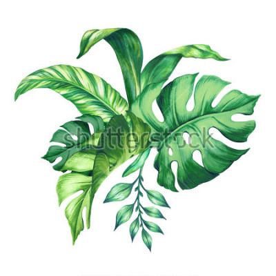 Väggdekor watercolor tropical green leaves, isolated on white background