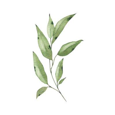 Väggdekor Watercolor tropical greenery floral leaf plant forest herb spring