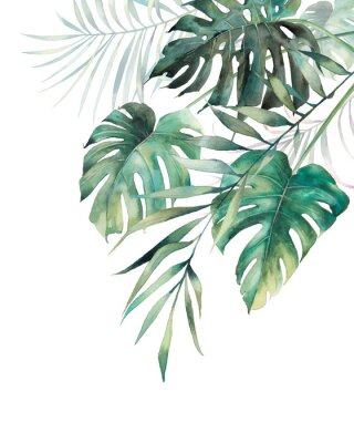 Väggdekor Watercolor tropical leaves poster. Hand painted exotic monstera and palm green branches composition on white background. Summer plants illustration