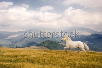 Väggdekor White horse