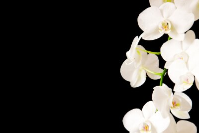 Väggdekor White  Orchid Branch.