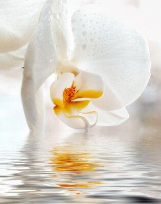 Väggdekor White Orchid. Närbild med reflektion i vatten.