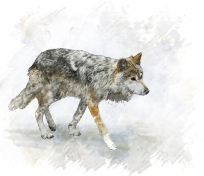 Väggdekor Wolf vattenfärg