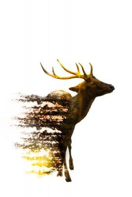 Väggdekor World Wildlife Day Miljö- och djurlivskoncept
