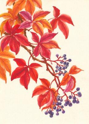 Väggdekor Дикий виноград осенью, красные листья и ягоды, живопись.