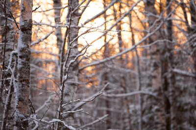 Väggdekor Берёзовый лес